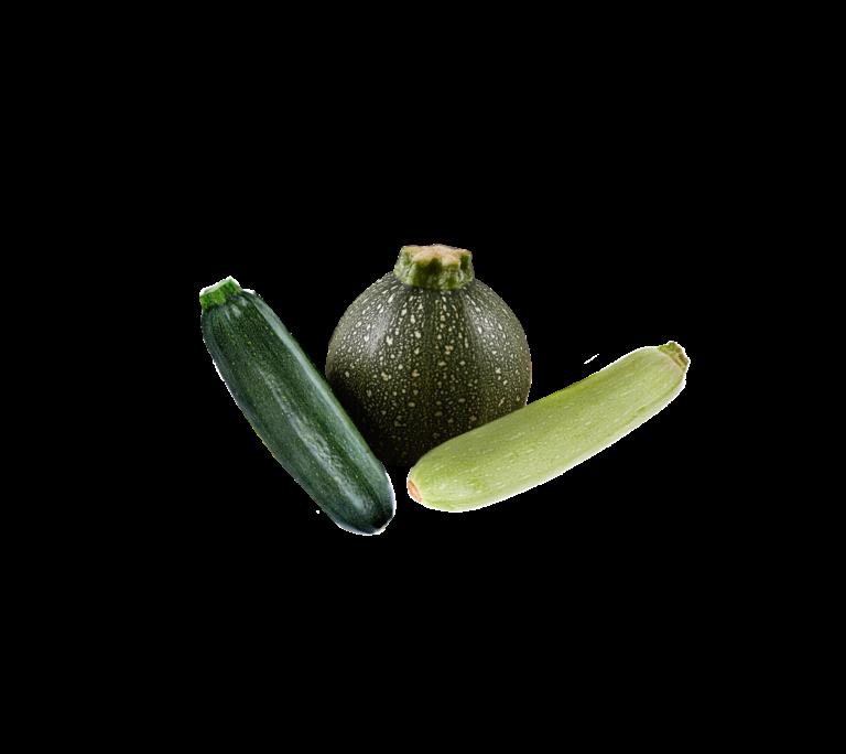 calabacin